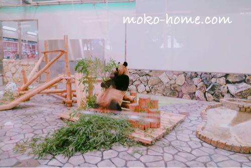 アドベンチャーワールドのパンダ