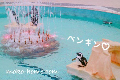 アドベンチャーワールドのペンギン