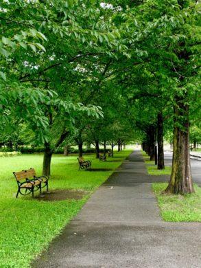 美しい並木道