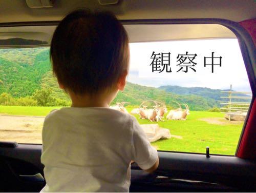 姫路セントラルパークのドライブサファリで動物を観察する1歳の子ども