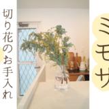 ミモザを北欧の花瓶ホルムガードフローラベースに飾る方法とお手入れのコツ5選